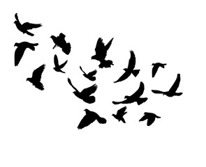 vector, isolated, silhouette of flying birds