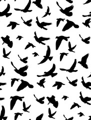 seamless background, pattern flying birds, isolated on white background