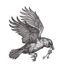 Летящий чёрный ворон, несущий ключи, сказочный посланник. Рисунок тушью на белом фоне.
