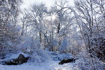 Parc régional naturel du Gâtinais français sous la neige
