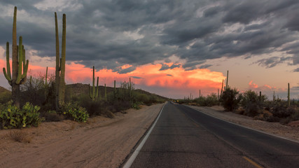 Foto op Canvas Natuur Park The Magical Landscape in Saguaro National Park, Panoramic Road at sunset, Tucson, Arizona.