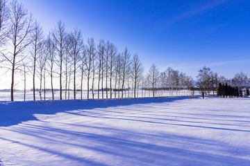 Fototapete - 十勝平野の雪景色