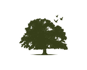 Green Oak Tree with Flying Bird Illustration Hand Drawing Symbol Logo Vector