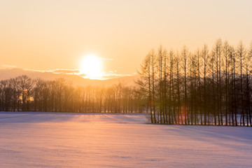 Fotomurales - 雪原へ沈む夕陽