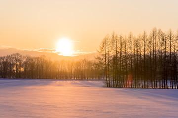 Fototapete - 雪原へ沈む夕陽