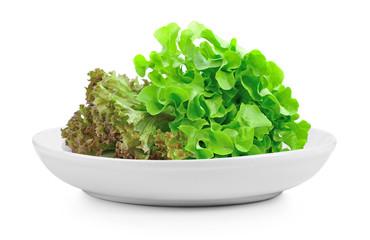 fresh green lettuce leaves in plate on white background