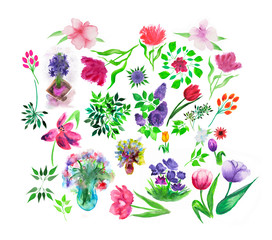 Set of watercolor hand painted floral and herbal elements.
