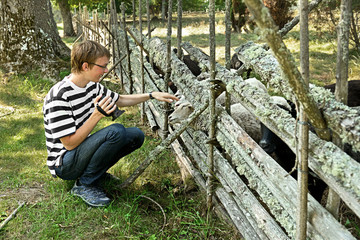 FinlandYoung man gives grass to sheep in paddock.