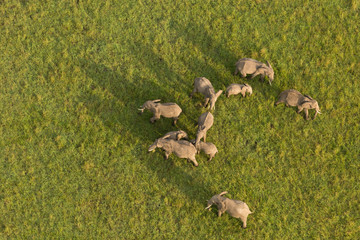 aerial view of a herd of elephants on the grasslands of the Maasai Mara, Kenya