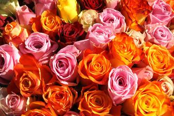 Blumen,Rosen,Angebot