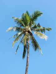 tall palm tree in tropical beach against blue clear sky for background
