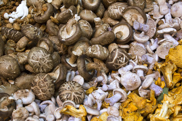An assortment of mushrooms on a stall at Borough Market, London, UK
