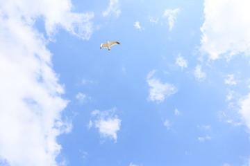 空飛ぶ鳥と雲