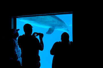 People and dolphin