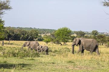 Elephant Family Serengeti Park 9104