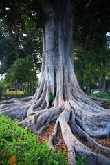 Close-up of huge tree roots