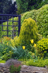 Spring garden border with a yellow theme.