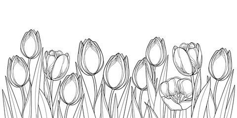Vector horizontal border with outline tulip flowers, bud and ornate leaves in black isolated on white background. Contour tulips for greeting spring design or coloring book.