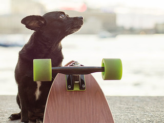 Dog and long board on a Neva river background