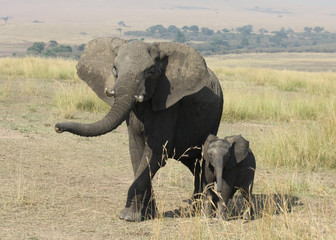 An elephant and her baby stroll across the Maasai Mara in Kenya