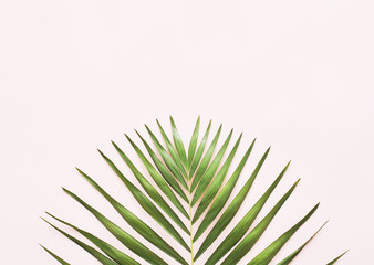 Green palm leaf on pink background