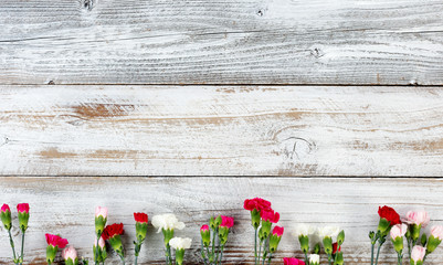 Colorful carnation flower bottom border on white weathered wooden boards