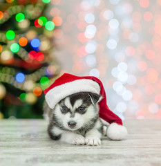 Husky puppy lying in red sata hat lying on a background of the Christmas tree