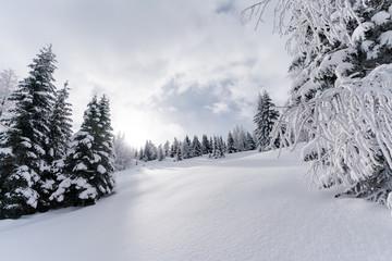 Unberührte Schneelandschaft mit Sonnenschein und Wald