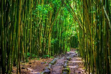 Printed roller blinds Bamboo Pipiwai trail bamboo