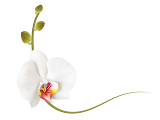 Realistic white orchid frame, corner.