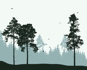 Vector illustration of a landscape with coniferous forest