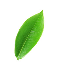 Green Tea leaf isolated on white background, Top view.