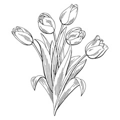Tulip flower graphic black white isolated bouquet sketch illustration vector