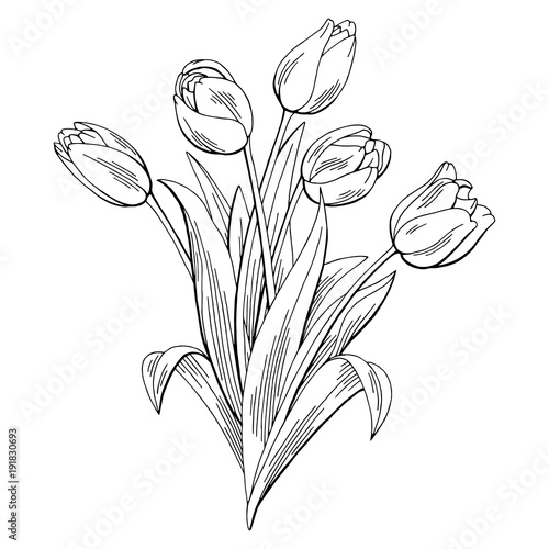Line Drawing Of Tulip Flower : Quot tulip flower graphic black white isolated bouquet sketch