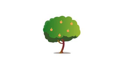 Cartoon orange tree with isolated white background vector.Fresh tree.Nature object on white