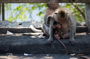 Baby monkey sleeping in her mom's embrace sitting on the dirty street.