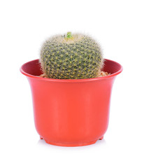 cactus in a red pot isolated on white background