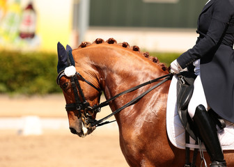 Horse in close-up in the dressage competition at the tournament course..