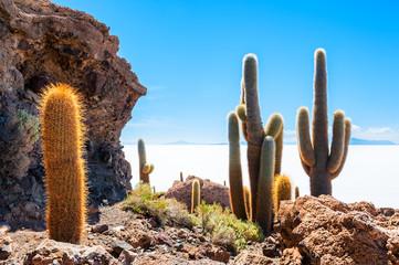 Foto op Plexiglas Cactus Big cactus on Incahuasi island, salt flat Salar de Uyuni, Altiplano, Bolivia
