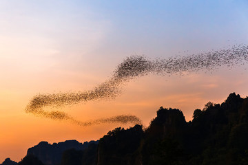 Bats Flying to Forage