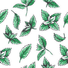 Vector seamless pattern with mint leaves. Botanical hand drawn illustration of herb. Floral texture in sketch style