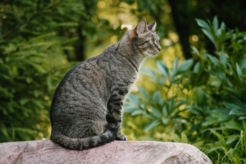 A domestic non-pedigreed brown cat in the center of the frame sits on a stone in full growth. Background of plants. Yellow-green background. Circles in blurred background. A pet in nature.