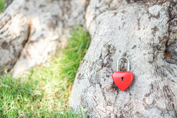 Key red heart on a tree root, the concept of love and Valentine's Day.
