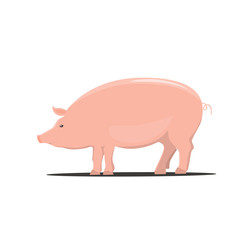 Pig, color cartoon vector illustrations isolated on the white background