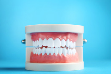 Teeth model on blue background