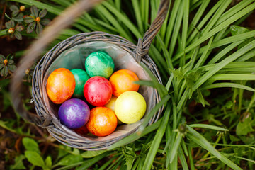 Closeup of colorful Easter eggs in basket outddors in green grass.