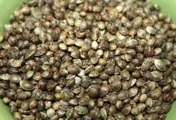 Marijuana seeds in a bowl close up. Hempseeds texture photo.