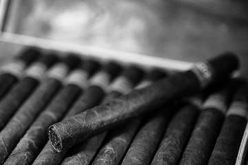 monochrome photo of large wooden box of cigars handmade Cuban