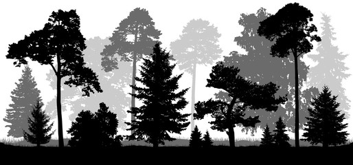Coniferous forest trees set silhouette. Background of nature.