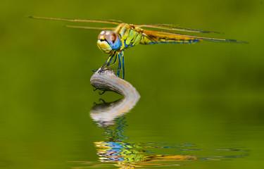 fauna y naturaleza verde